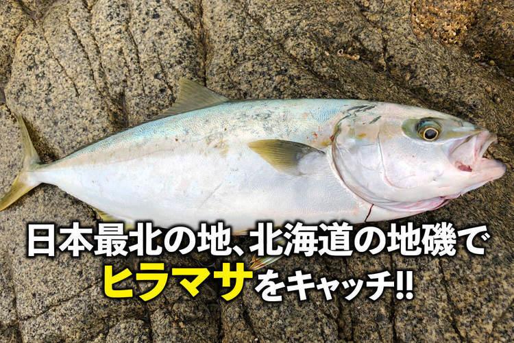 日本最北の地、北海道の地磯でヒラマサをキャッチ!!