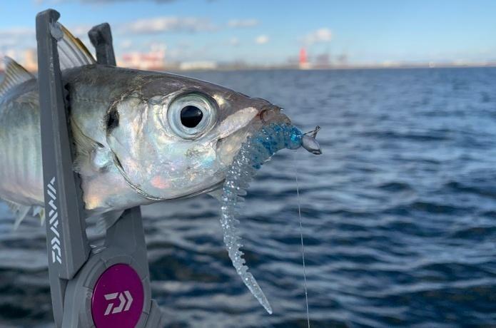 おすすめのアジング用ジグヘッドを元釣具屋が厳選&選び方の基礎知識
