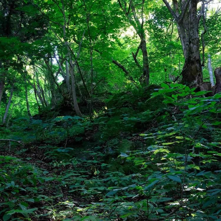 万仏山岩岳尾根 緑の茂る急登尾根