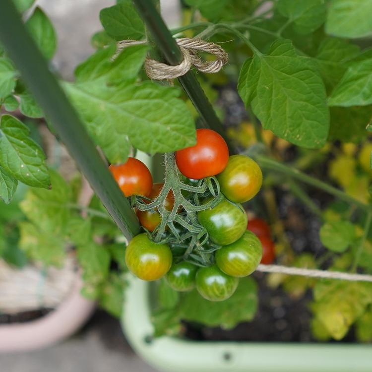 庭の抜本的改革の、その後