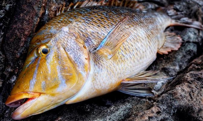 沖縄のフカセ釣りでタマンを狙いたい!けれど旅行はしばらくガマン!足場の良い釣り場で練習しておこう