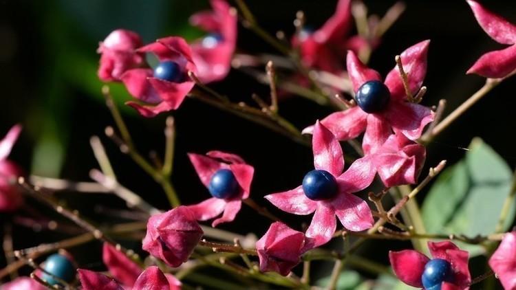 秋は、植物の旅を観察しよう!