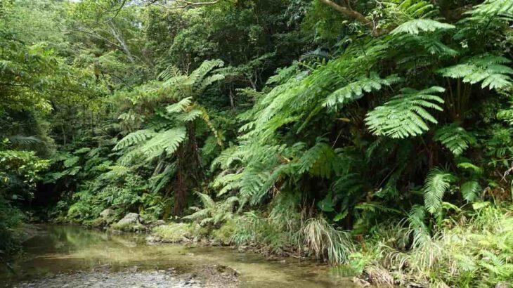 沖縄の大自然をリバートレッキングで満喫!おすすめエリアやツアーを厳選して紹介