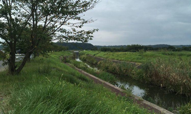 印旛沼水系のおすすめポイント!小バスの数釣りが期待できる水路。