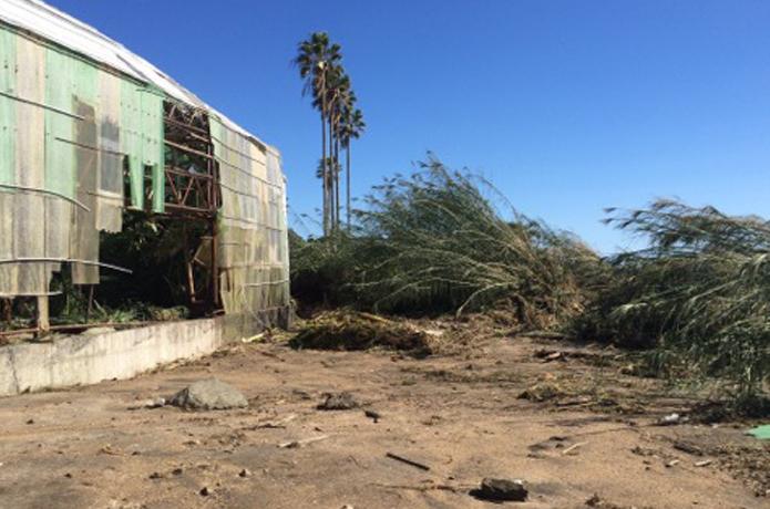 台風が直撃したキャンプ場「白浜フラワーパーク」はいかにして復興したか?