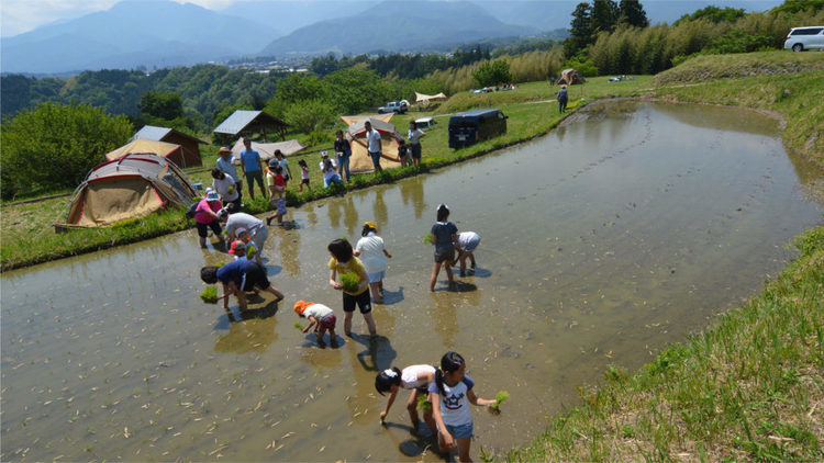 【採れたて野菜を召しあがれ】 魅力と栄養タップリの収穫体験キャンプ