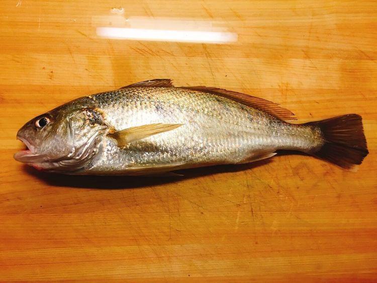 ORETSURI流イシモチ料理16選。和洋中の料理レシピに迷ったらこれ!