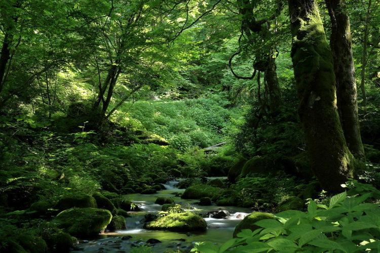 この夏に行きたい!奥大山イチオシのスポット木谷沢渓流をご紹介