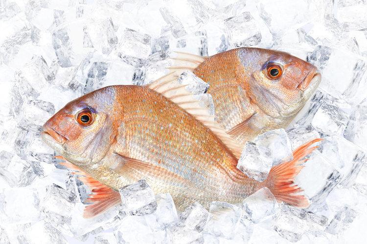 タイってつく魚が全部マダイの仲間とは限らない!?マダイにあやかりたい「あやかり鯛」の由来とは?