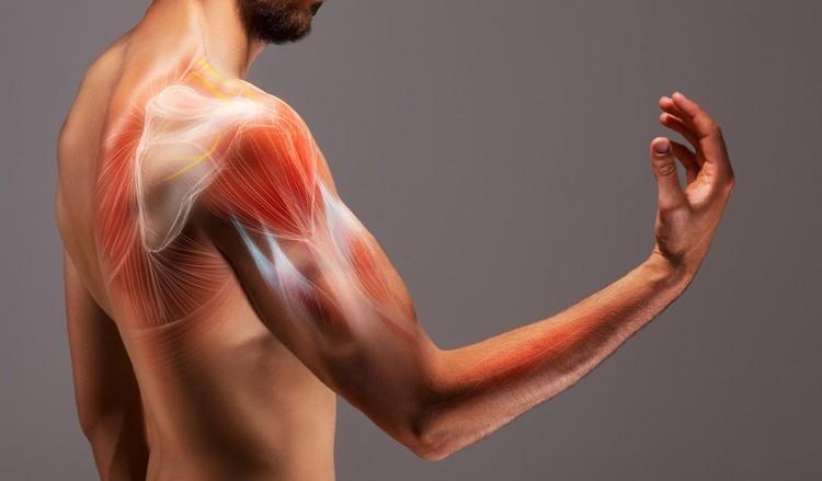 「筋肉痛」はなぜ起きる?痛みの予防方法は?筋肉痛のよくあるギモンも解説