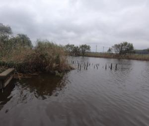 2019年初秋のバス釣り!印旛沼水系の某有名水路でナイスフィッシュ!!