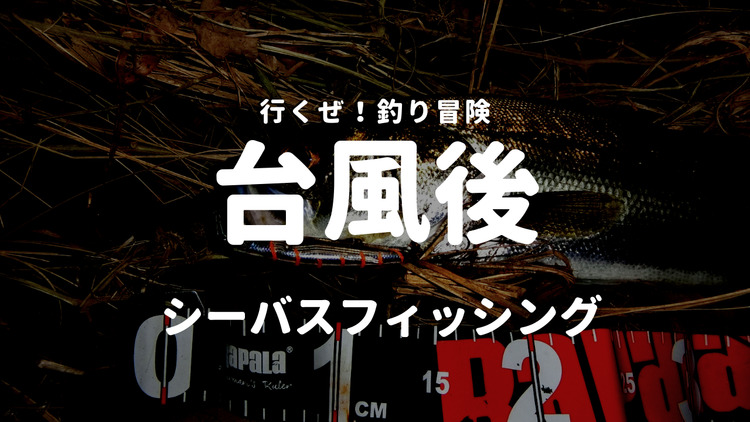 2019年台風19号関東上陸!その3日後シーバス釣行