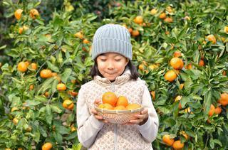 今が旬。実りの秋は島根・山口・徳島で果物狩りを!