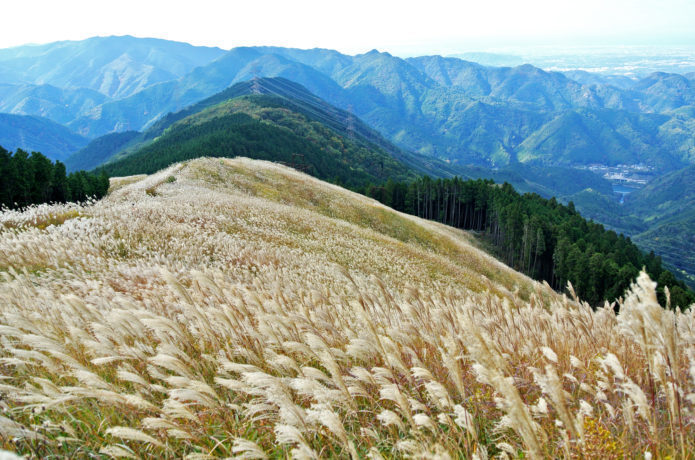 岩湧山|秋の「花ススキ」が美しい!大阪の街を一望できる新日本百名山