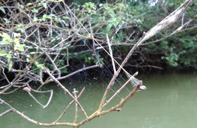 クモの巣が釣り場ポイントのあちこちに!バス釣りにうまく活用してみよう