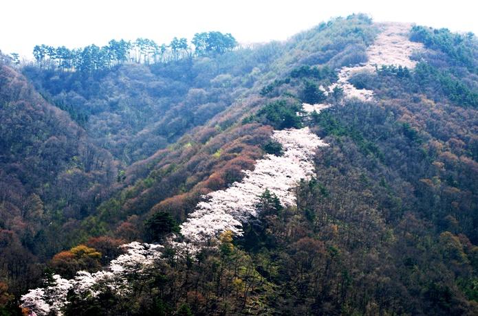 2千本もの桜が連なる光城山!見頃の時期やおすすめ登山コースを紹介!