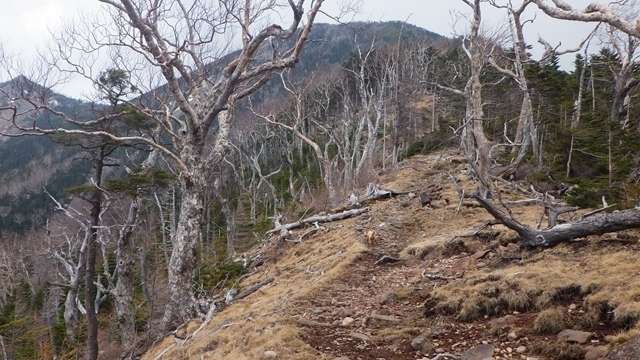 八ヶ岳の三ッ頭|日帰りで登る