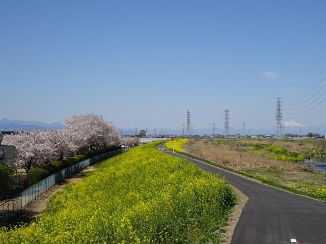 印旛沼をサイクリング!おすすめコースや穴場スポットもご紹介!
