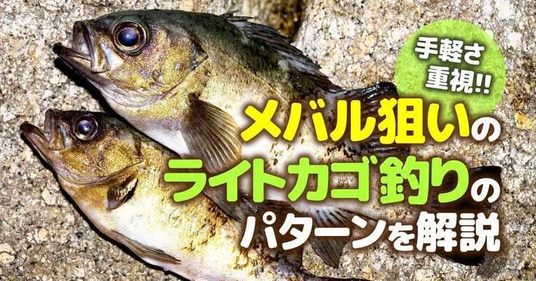 手軽さ重視!! メバル狙いのライトカゴ釣りのパターンを解説