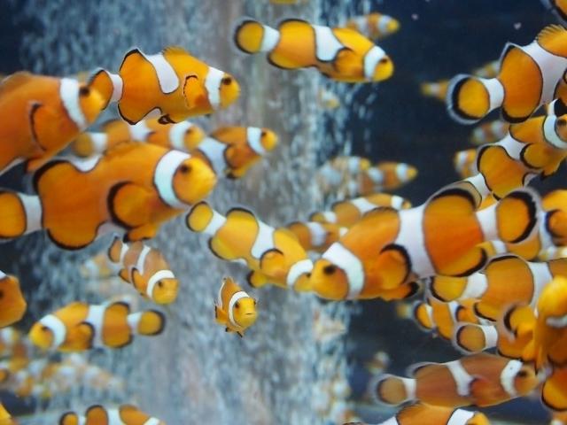 【2020最新】千葉の水族館おすすめ8選!観光・デート・子連れに人気なのは?