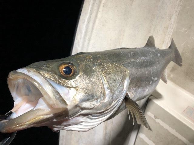 【超初心者向け】これさえ知れば必ず釣れる!シーバスの釣り方ガイド