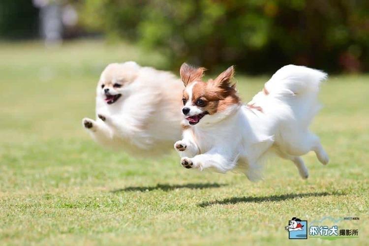【イベント】2020年9月20日(日)、21日(月)八ケ岳の大自然で愛犬と楽しい「トキ」を過ごす国内唯一の「そとあそび」イベント『アウトドアドッグフェスタin八ヶ岳 2020』
