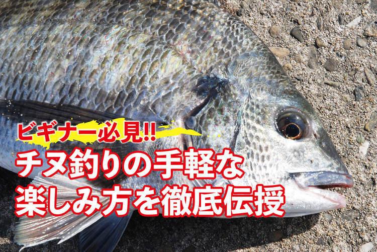 【ビギナー必見!!】チヌ釣りの手軽な楽しみ方を徹底伝授