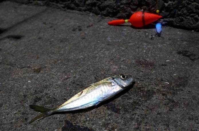 初心者でも釣れる【投げサビキ入門】仕掛け・釣り方を元釣具屋が解説