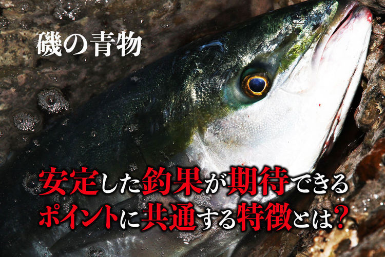 磯の青物、安定した釣果が期待できるポイントに共通する特徴とは?