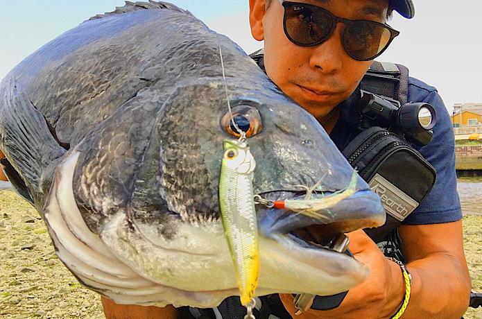 【チヌトップ超入門】エキスパートが時期・ルアー・釣り方を超わかりやすく解説