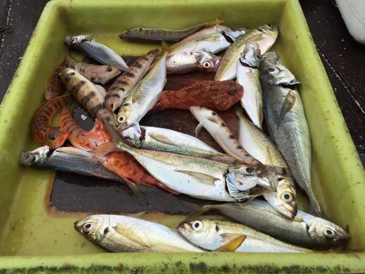 海釣りの「潮回り」について。「大潮」だから釣れるというのはホント?
