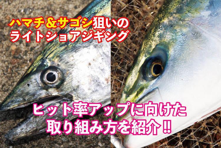 【ハマチ&サゴシ狙いのライトショアジギング】ヒット率アップに向けた取り組み方を紹介!!