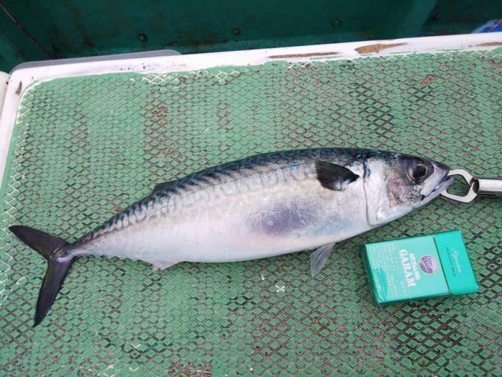 釣り人が言う「大鯖」「中鯖」「小鯖」の違いについて