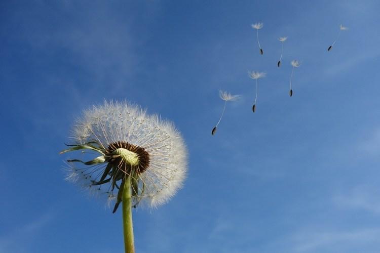 【気象予報士解説】どうして風は吹くの?原理・仕組みを解説!気圧との関係も