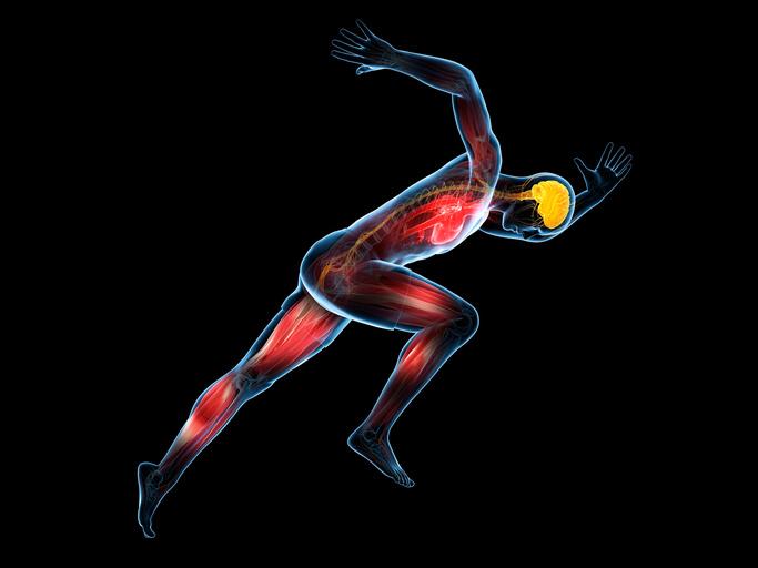 「自分が運動すべき理由」が見つかる本『脳を鍛えるには運動しかない!』│スポーツがしたくなる今月の1冊