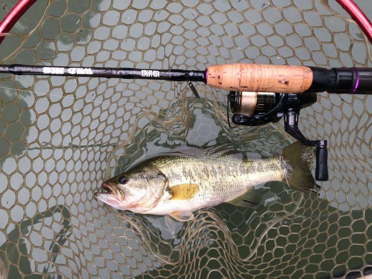 7月の相模湖釣行。厳しい濁り。なんとか40cm1080g、35cm780g。各所の濁りについて。