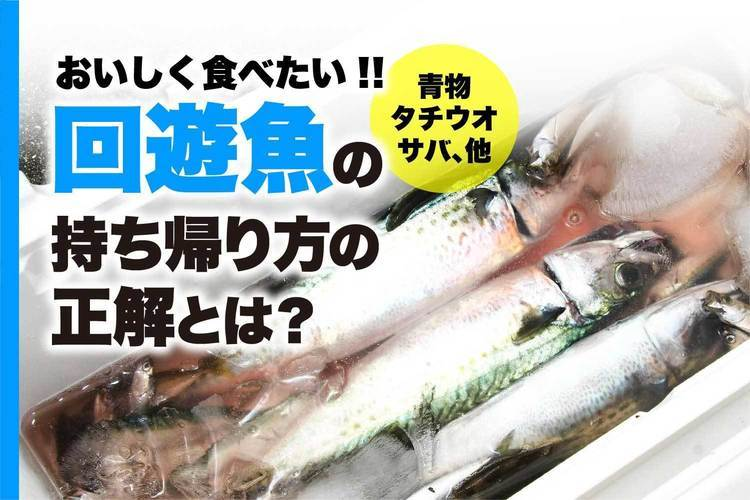 おいしく食べたい!! 回遊魚(青物・サバ、他)の持ち帰り方の正解とは?
