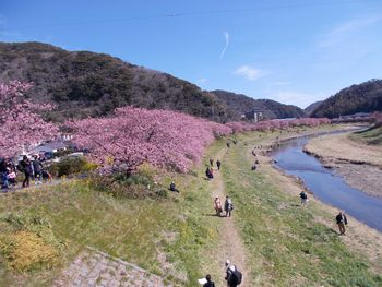 You can see beautiful cherry blossoms in early spring.