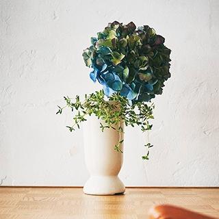 【映える紫陽花】をセンスよく飾って、梅雨は室内での時間を楽しもう