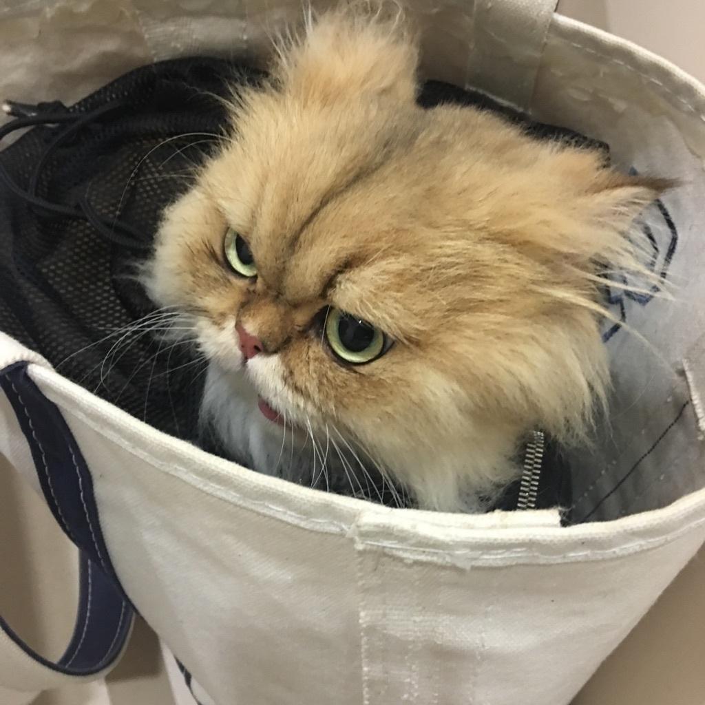 にゃんバカ必見! 可愛すぎるゲスト猫