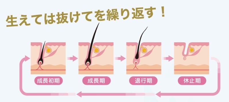 毛周期について