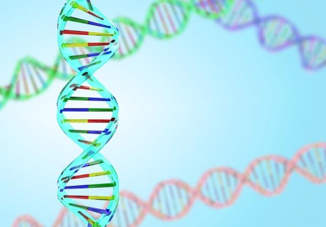 ①遺伝で体毛が薄い