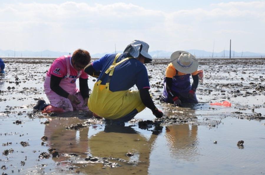 潮干狩りで採れる貝の種類は?食べられない貝の見分け方や持ち帰り方も