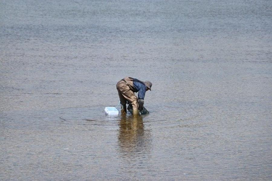 城南島海浜公園の潮干狩り情報まとめ!おすすめの時期や必要な道具も