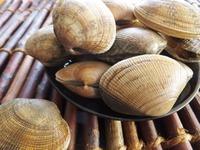 食べられない貝・食べられる貝の種類・見分け方を徹底リサーチ!
