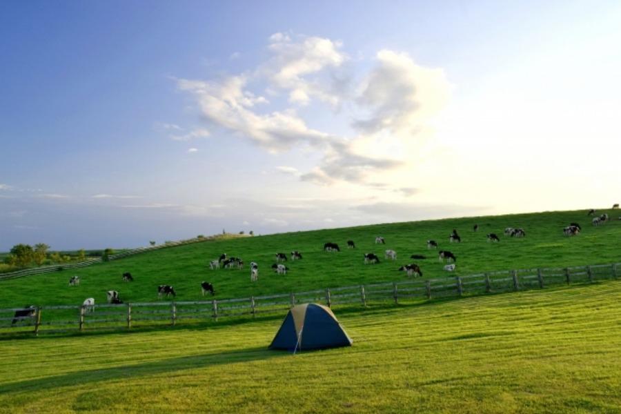 服部牧場でキャンプしよう!動物とふれあえてファミリーにおすすめ!