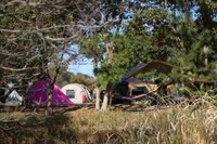 田の浦野営場は無料のキャンプ場!キャンプや釣りを思う存分満喫できる