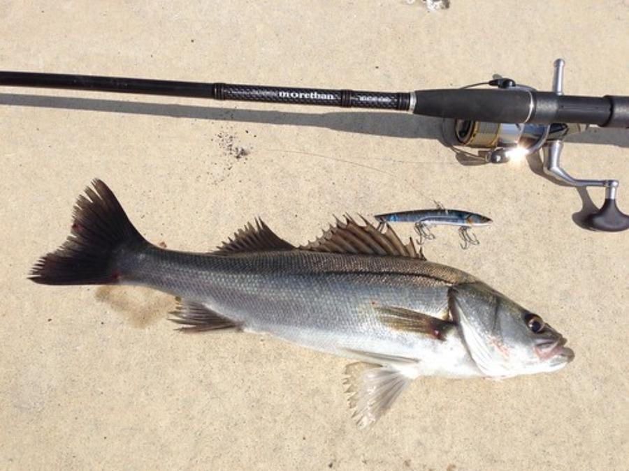 泳がせ釣りにシーバスロッドがおすすめ!仕掛けや釣り方のコツも