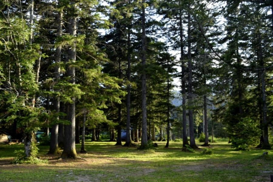 然別湖北岸野営場でキャンプする魅力を紹介!基本情報を詳しく紹介!
