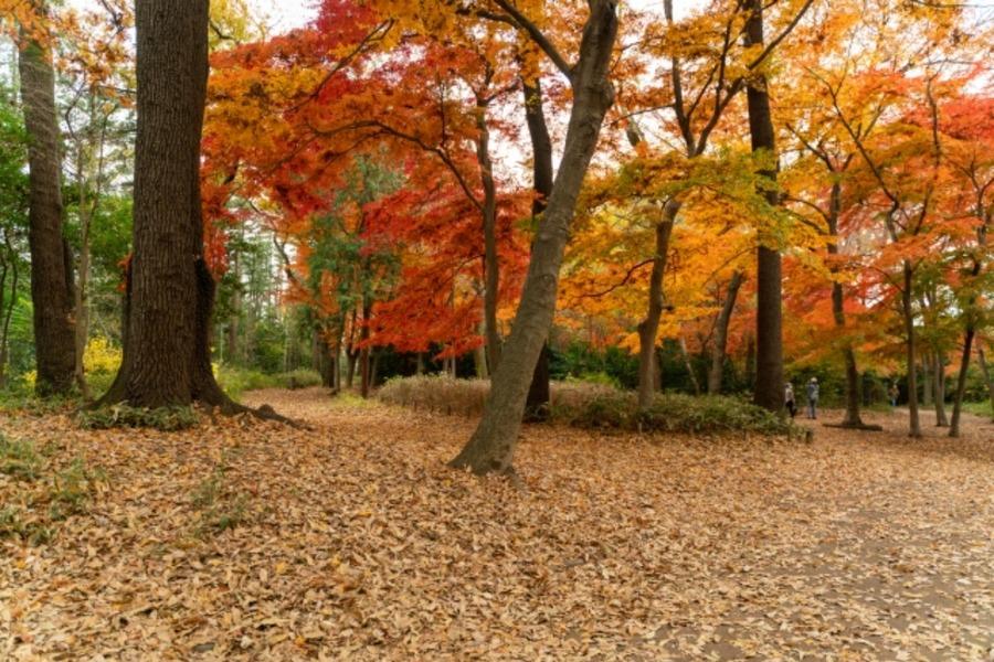 キャンプで紅葉が楽しめるキャンプ場15選!選ぶ時のポイントは?